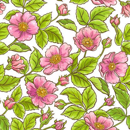 wild rose  pattern Vector illustration.