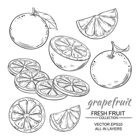 Grapefruit vector illustration sketch set
