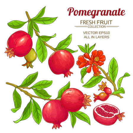 Pomegranate and branches vector illustration
