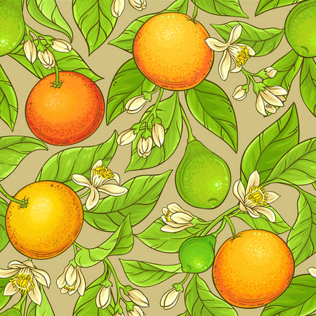 Grapefruit vector pattern Stock Illustratie