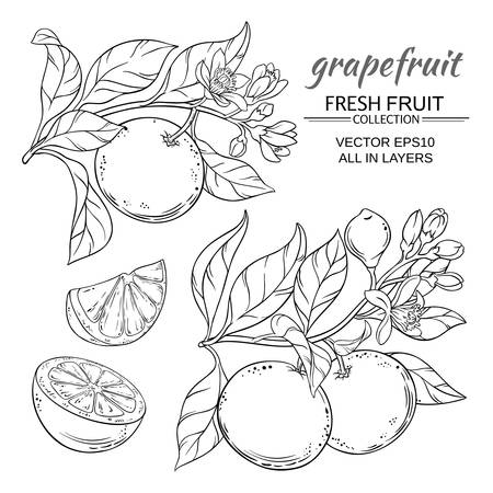 Grapefruit vector set Vettoriali