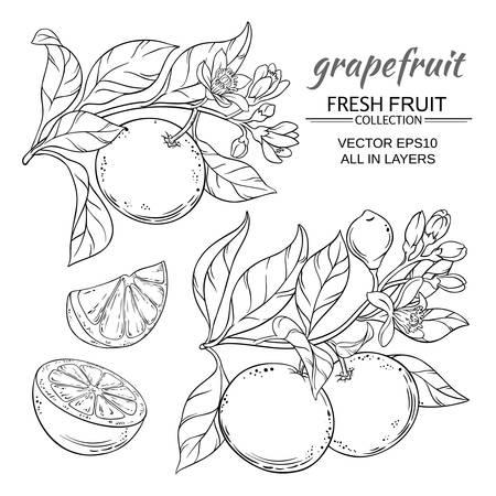 Grapefruit vector set Illustration