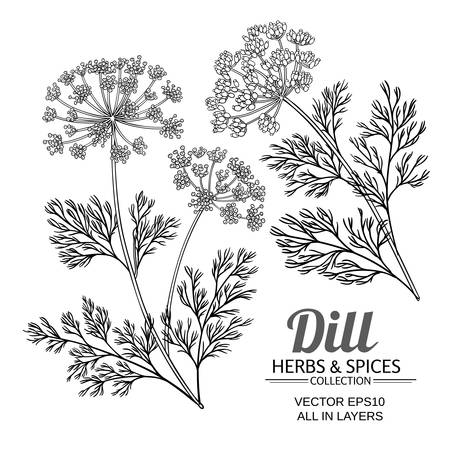 Zestaw wektorów roślin koperkowych