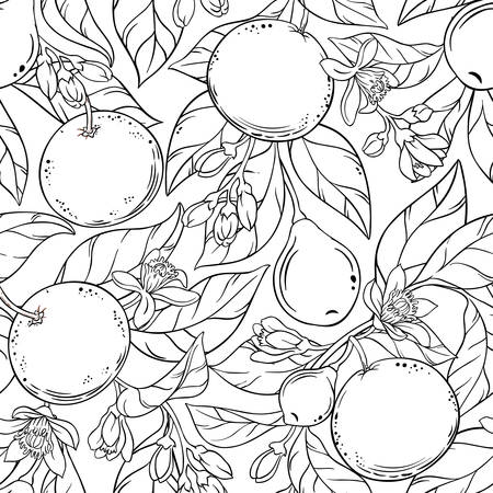 Grapefruit vector pattern Illustration