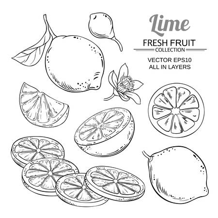 Lime fruits vector set Illustration