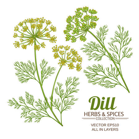 Dill Pflanze Vektor-Set