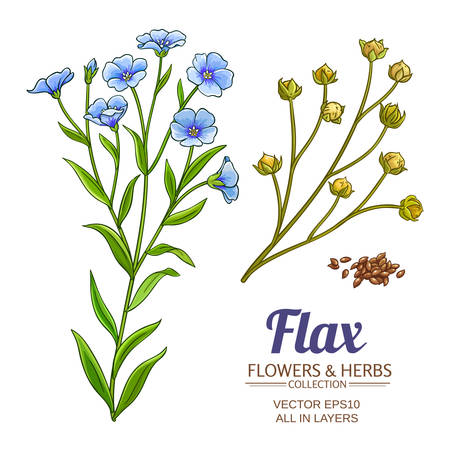flax vector set