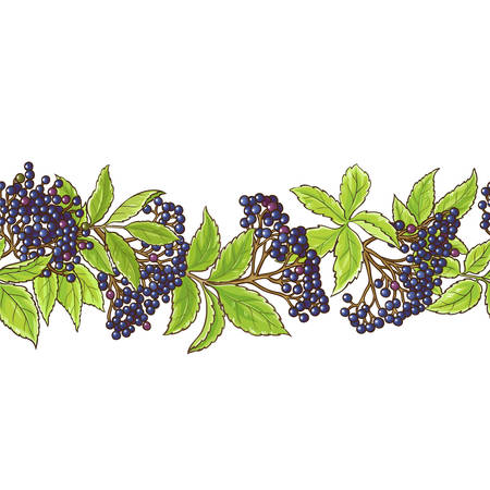 elderberry branch vector pattern illustration.