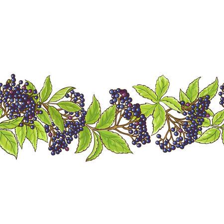 elderberry branch vector pattern illustration.