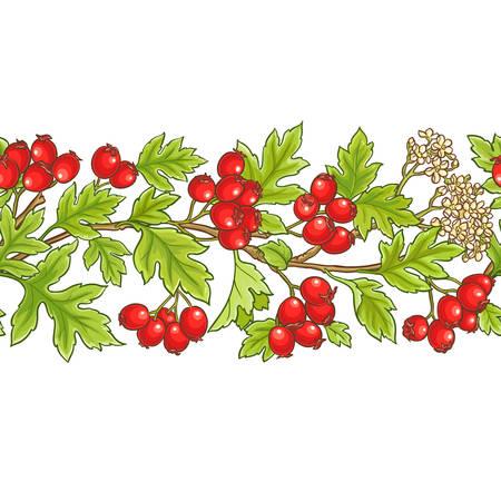 Hawthorn branch vector pattern illustration.
