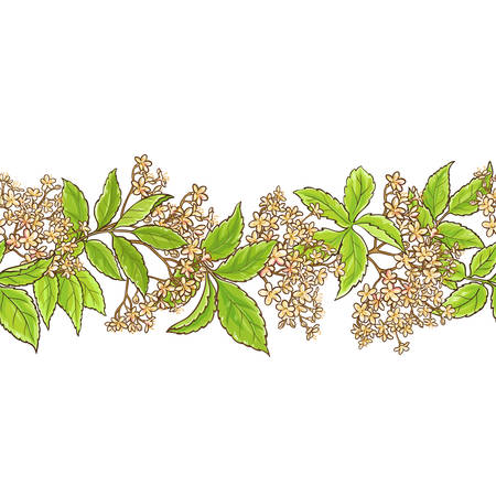 Elderberry branch vector pattern seamless pattern design