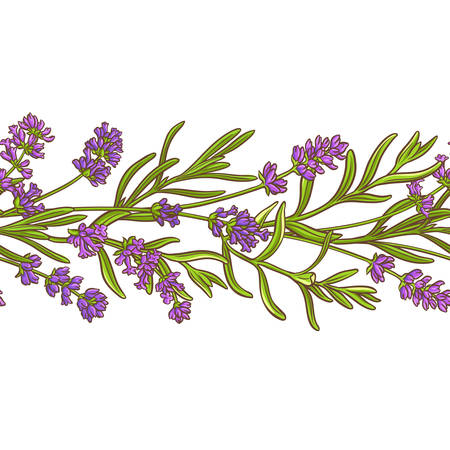 Lavender plant vector pattern seamless design background Illustration