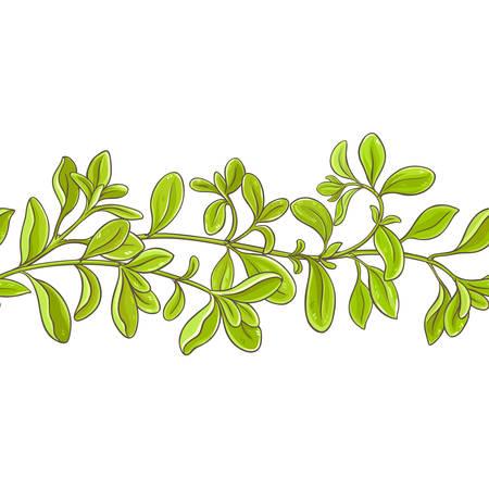 Marjoram branch vector pattern on white background