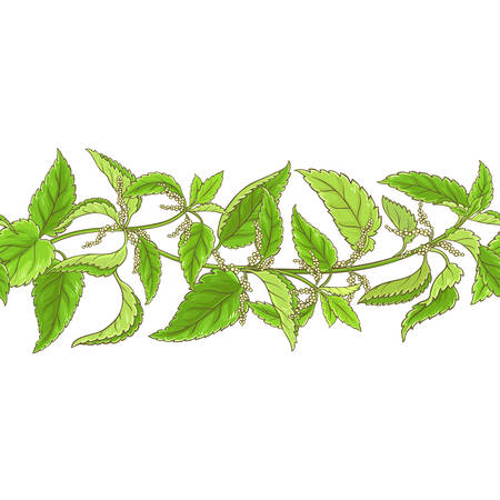 nettle plant vector pattern on white background 일러스트