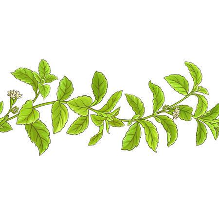 Stevia branch vector pattern.