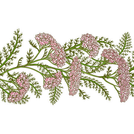 Milfoil vector pattern.