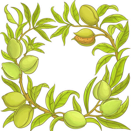 Almond vector frame.