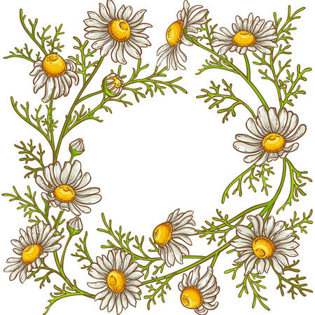chamomile flower  frame Vector illustration. Иллюстрация