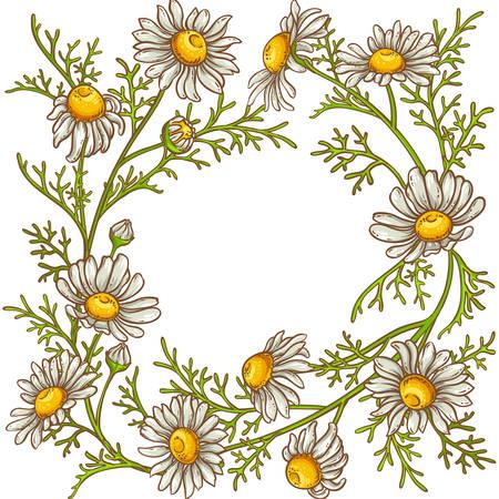 chamomile flower  frame Vector illustration. Illustration