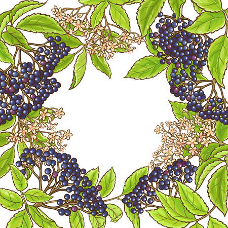 Elderberry branch vector frame