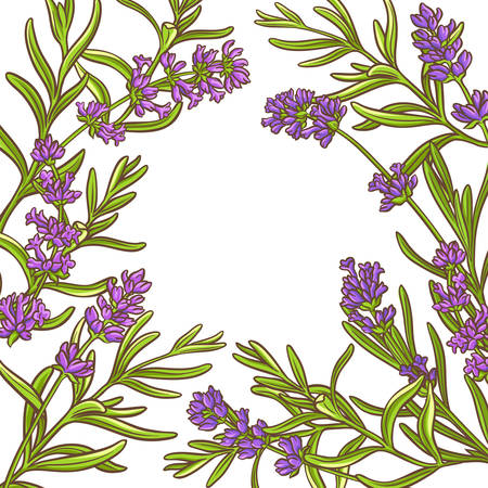 lavender plant vector frame on white background