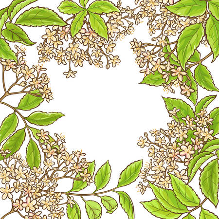 elderberry branch vector frame on white background Çizim