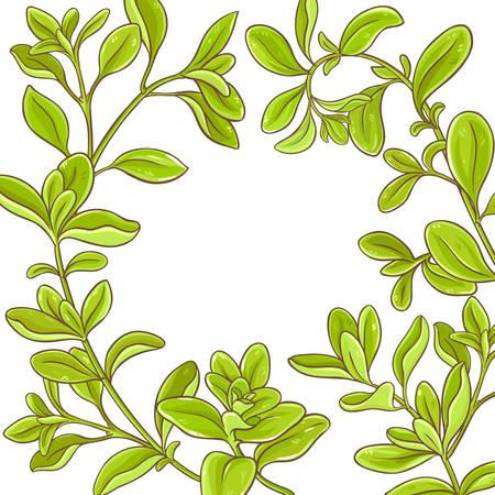 Marjoram branch frame border illustration. Ilustracja