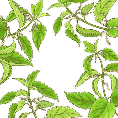 Nettle plant vector frame on white background