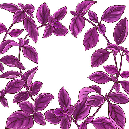 Basil plant frame border illustration. Ilustrace