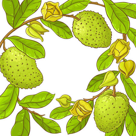 Sour sop branches frame isolated on white.