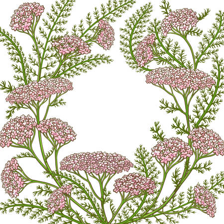 milfoil vector frame Ilustracja
