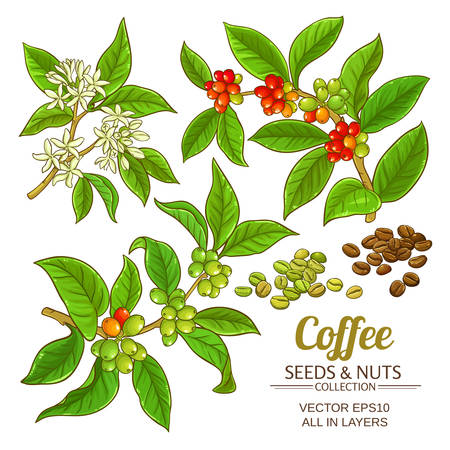 Coffee vector set icon.