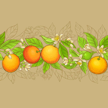 grapefruit vector pattern