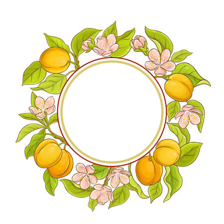 apricot vector frame 向量圖像