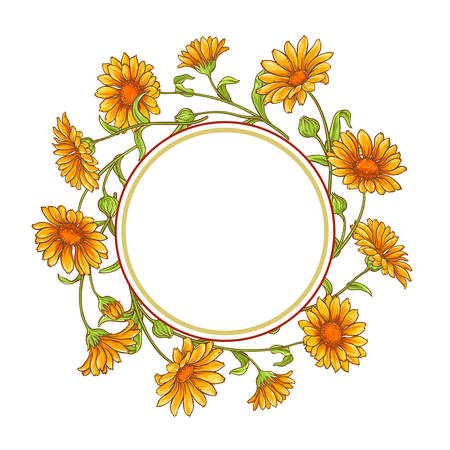 Calendula flower vector frame illustration on white background.