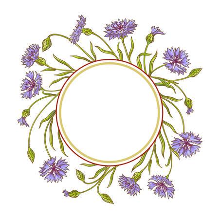 cornflower plant vector frame on white background Illustration