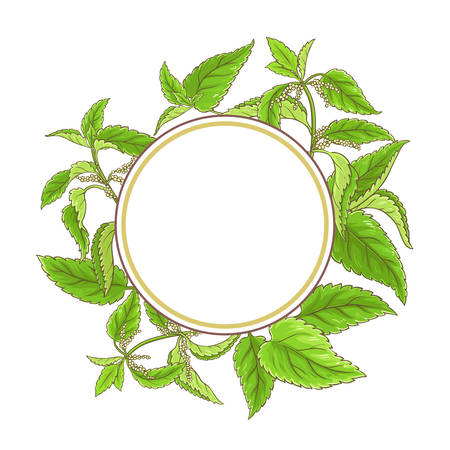 nettle plant vector frame on white background Banque d'images - 100825840