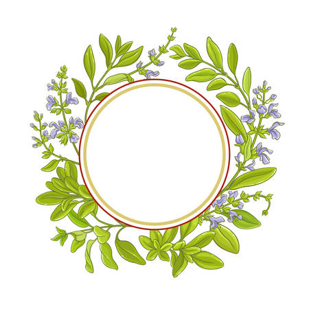 sage branch  vector frame Illustration
