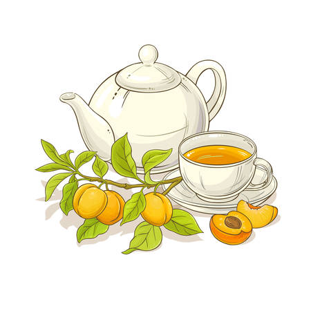 apricot tea illustration