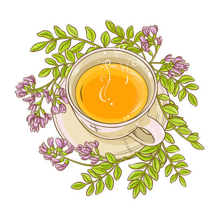 astragalus tea illustration
