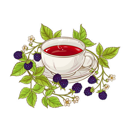 blackberry tea illustration