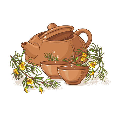 rooibos tea illustration