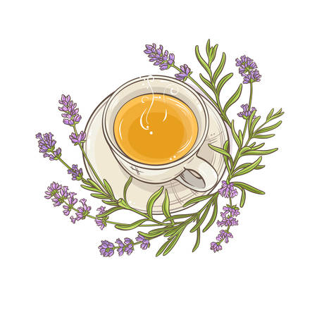 lavender tea illustration Illustration