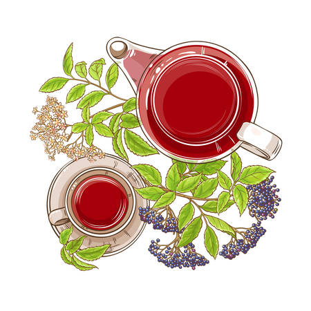 elderberry tea illustration Illustration