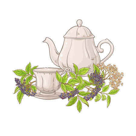 elderberry tea illustration Stock Illustratie