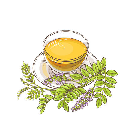 licorice tea illustration Vectores