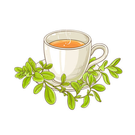 marjoram tea illustration