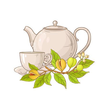 nutmeg tea in teapot illustration on white background