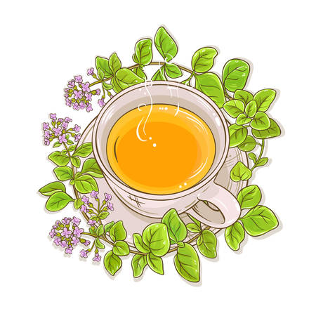 oregano herbal tea illustration on white background