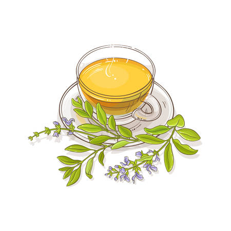 sage tea vector illustration on white background Ilustração